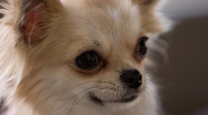 あまり知られていない犬の年齢!老犬って何歳から?