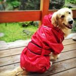 賛否両論!でも、犬の着衣は利点だらけ!