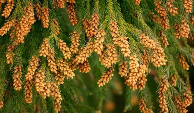 【今年は去年の4倍!!】花粉の季節がやってくる!目がかゆくなる理由&対策法